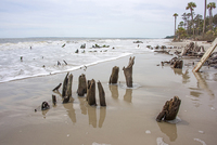 Stumps, Daufuskie Island